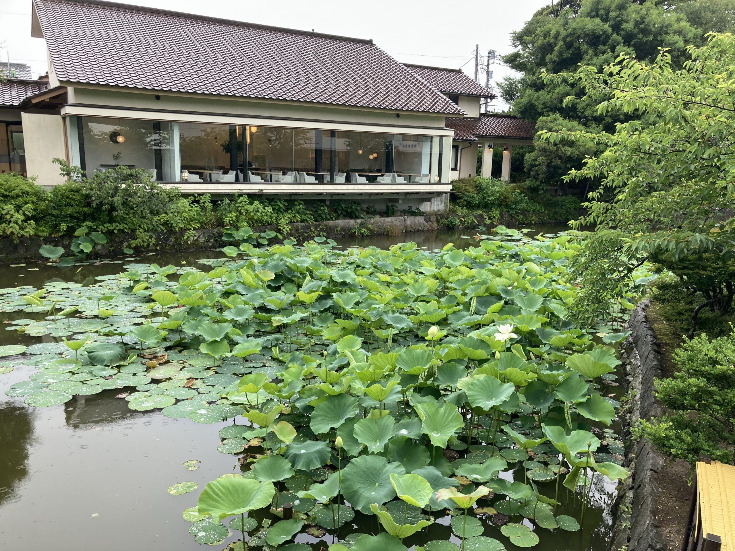 鶴岡八幡宮茶寮「風の杜」の写真